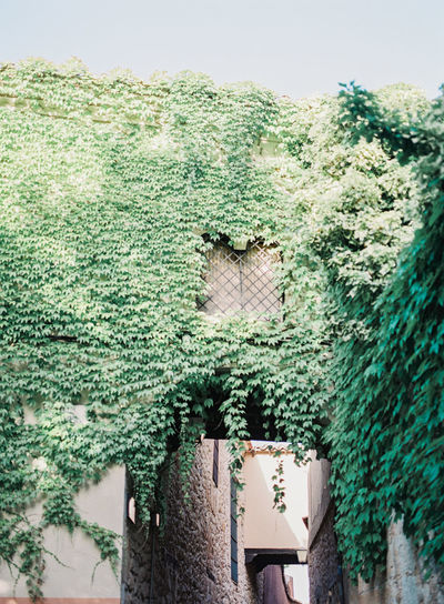 A window above a walkway engulfed in greenery. Copy Space Growth Overgrown Architecture Creeper Plant Garden Green Color Growth House Nature No People Plant secret garden Window