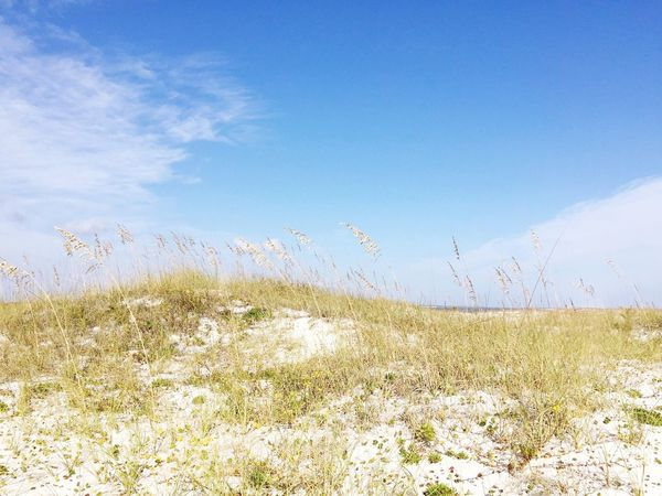 Nature Growth Blue Sky Uncultivated Scenics Grass Tranquility Day No People Beauty In Nature Outdoors Landscape Tall Grass Tranquil Scene Sand Dune Seaside Beach Sea Seascape My Year My View Cloud - Sky