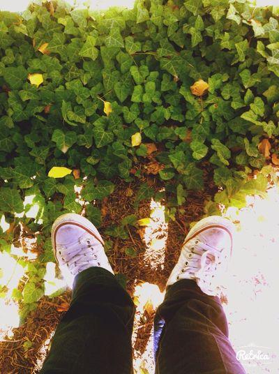 Summer 2014 Gunes Yeşillik 👟