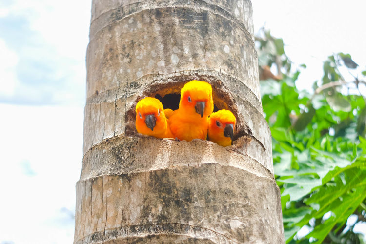 Low angle view of birds on tree