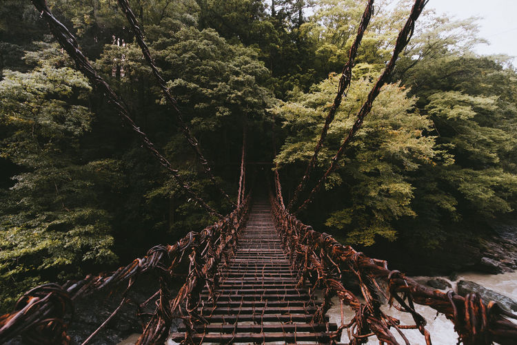 Tree Plant The Way Forward Direction Nature Forest Day Land Diminishing Perspective No People Outdoors Bridge Growth Connection Footbridge Tranquility Built Structure Architecture Beauty In Nature Transportation Nikon