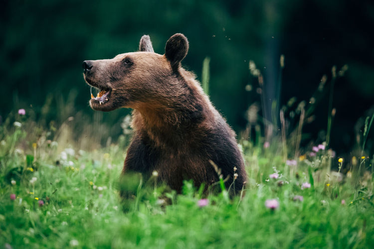 Bear on grass in forest