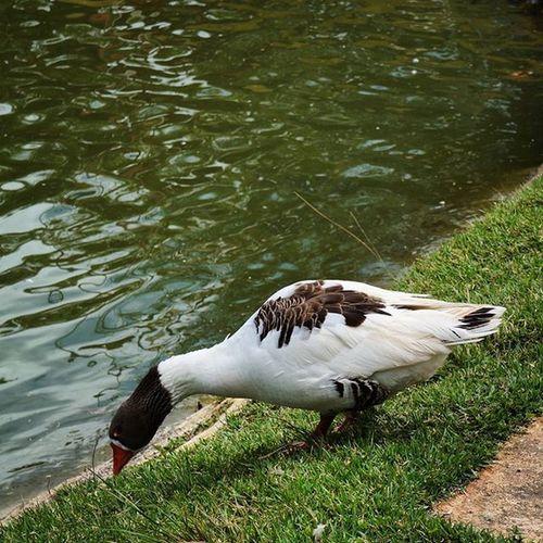 Écolandia Duck ✌😉📷