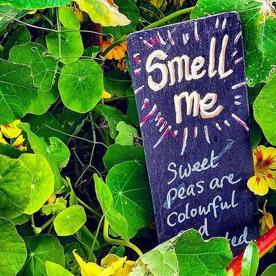 Smell me! Little_munchkin_patch_Childcare