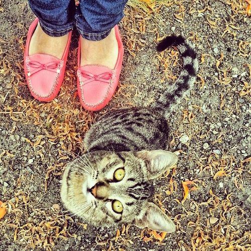 Acariciar la grandeza de un tigre en la ciudad. Gatos♥. IgersVenezuela Hdr_ve Instapro_ve Instagramcats insta_ve instashot_ve cat photooftheday venezuela gato photography editsvzla igersmiranda igers adorable :)♥