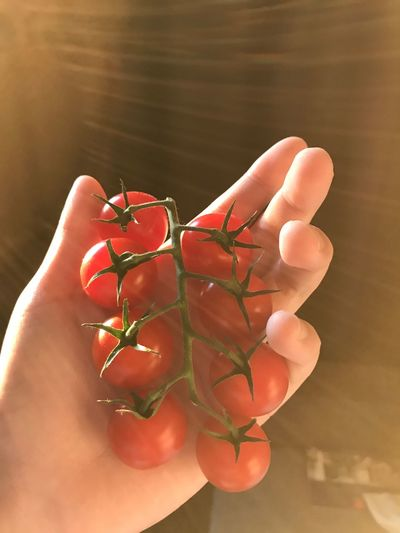 Close-up of hand holding red berries