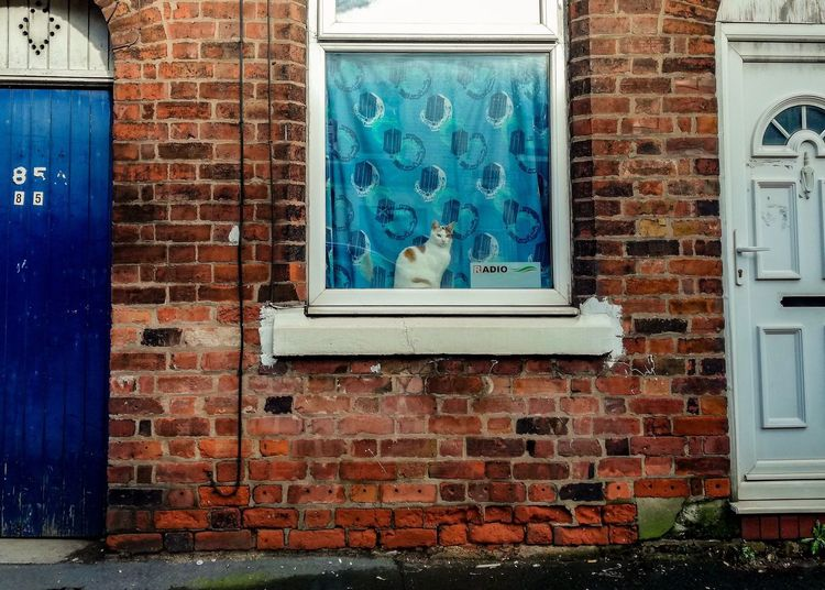 Urban Scene Urban Terraced Houses Terrace Cat Lovers Cat Photography Cat In Window Feline Cat Built Structure Brick Architecture Brick Wall Wall Building Exterior No People Wall - Building Feature Day Entrance Door Window Building Outdoors Blue Text Communication
