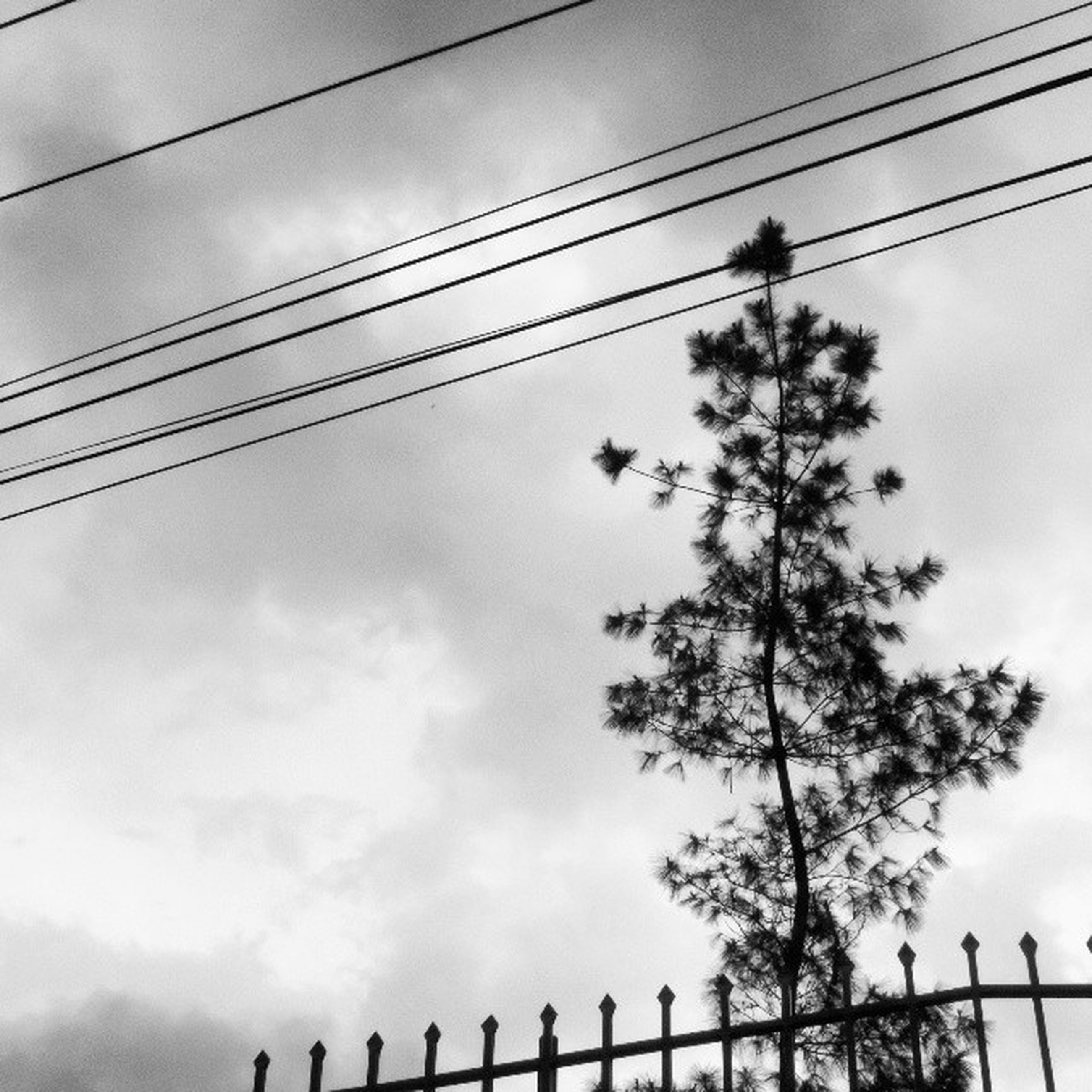 power line, low angle view, cable, connection, power supply, electricity pylon, electricity, sky, power cable, silhouette, technology, fuel and power generation, cloud - sky, cloudy, cloud, wire, outdoors, day, tree, no people