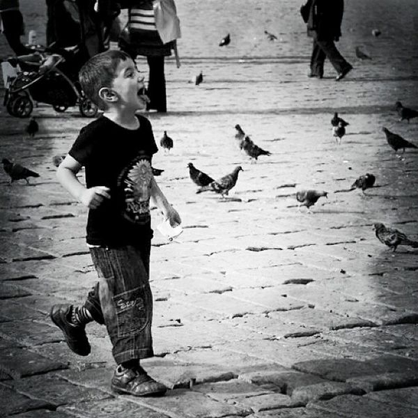 Grown up, and that is a terribly hard thing to do. It is much easier to skip it and go from one childhood to another. F. Scott Fitzgerald Tinycollective Storytime Streetphoto Child grownup hikayezamani hergunebirfoto zamanidurdur birds istanbuldayasam life photooftheday blackandwhite beniminsanlarim