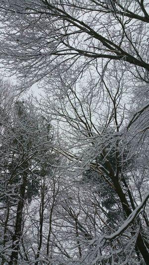 Winter In New England Snow Massachusetts