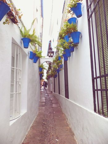Córdoba Architecture Building Exterior City Multi Colored Perspective Street Scenics Journey Blue Holydays Colorful Beauty In Nature Exterior SPAIN Andalucia España SPAIN Andalucia, Spain Flowers Of The World. Flowers