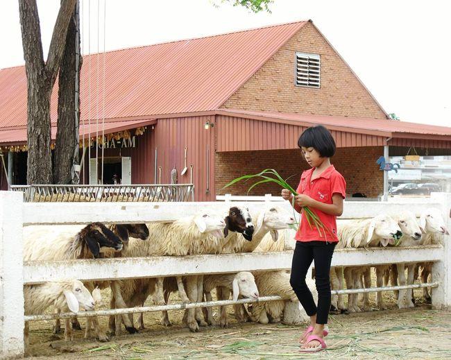 Capturing Freedom Littlegirl Feeding Animals Communication Farm Lovely Taking Photos Beautiful Nature On Your Doorstep