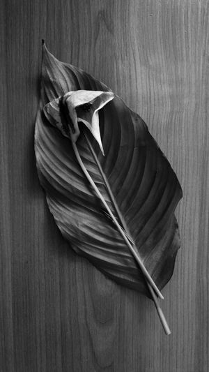 Blackandwhite Photography Autumn🍁🍁🍁 Moscow Mobilephotography черно-белое Photographer Black & White Magic Moments Nature фотограф Leaves And Flowers High Angle View Leaves🌿 Москва Black And White No People Wood - Material Studio Shot Close-up Indoors  Day