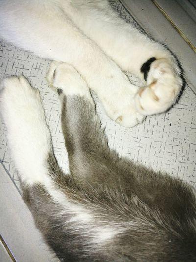 patas y manos