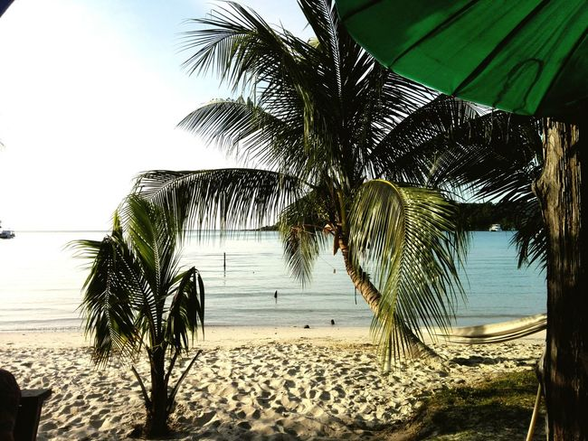Beach Sea Water Nature Tree Sand Palm Tree No People Tranquility Growth Day Outdoors Sky Horizon Over Water Beauty In Nature Thailand Thailand Love Thailand Landscape
