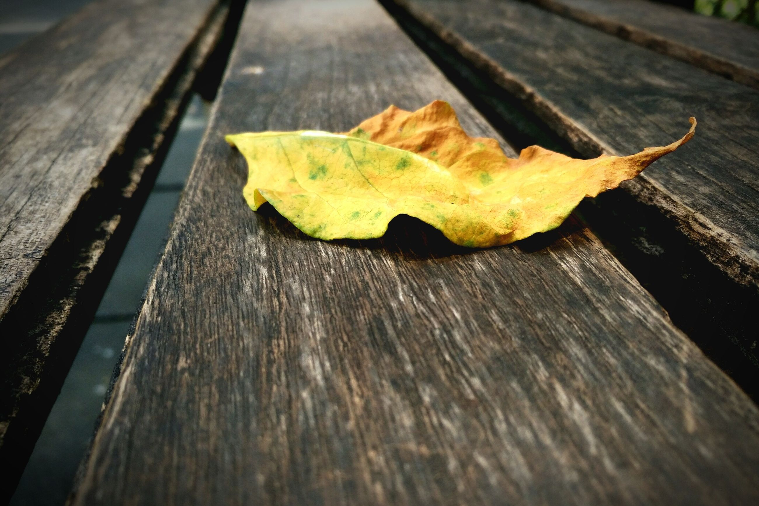 leaf, wooden, wood - material, autumn, change, dry, high angle view, plank, season, yellow, single object, natural condition, nature, water, fallen leaf, boardwalk, surface level, wood, fallen, tranquility, day, wood paneling, fragility, no people
