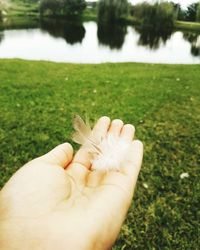 This feather is fragile but free. Human Hand Outdoors Personal Perspective Feathered Beauty First Eyeem Photo