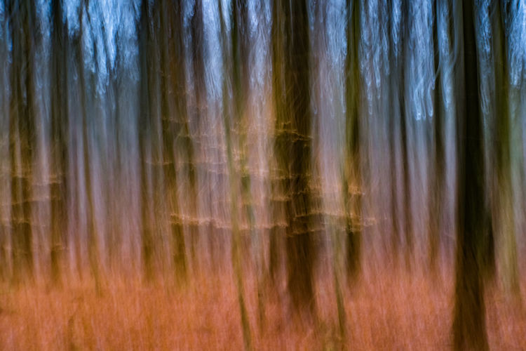 Abstract Sachsenwald Photoart Forest No People Tree Backgrounds Tranquility Full Frame Nature Close-up Motion Beauty In Nature Day Outdoors Blurred Motion Pattern Plant Tranquil Scene Scenics - Nature Tree Trunk Brown