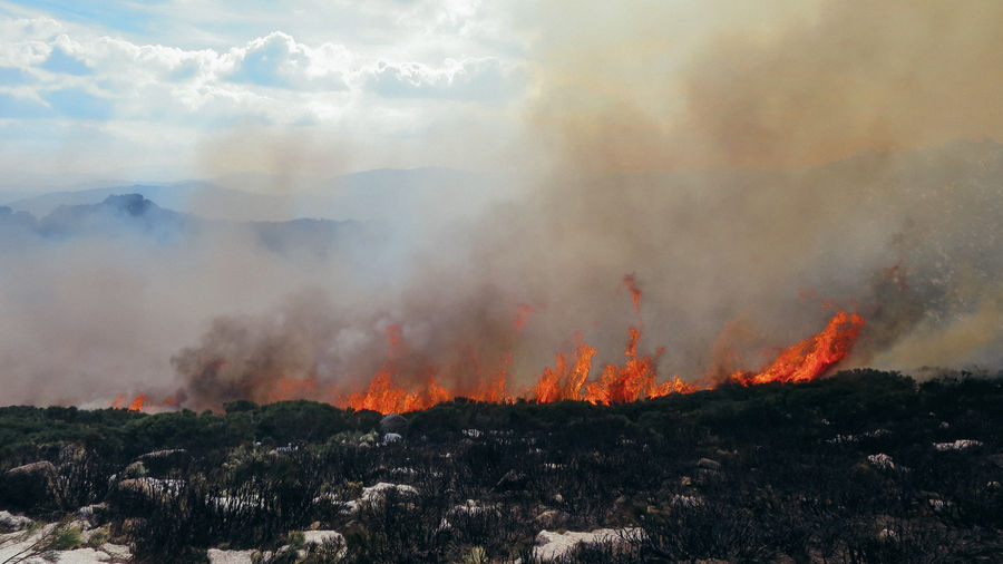 View of trees burning in forest fire