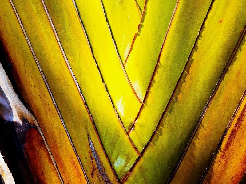 Full Frame Backgrounds Close-up Pattern Multi Colored Getting Inspired Leaf 🍂 Abstract Expressionism Wilderness Detail EyeEm Gallery Leafs Colors Exceptional Photography My Unique Style Artistic Expression Green Color Beauty In Nature EyeEm Best Shots Leaf Photography Abstract Banana Tree