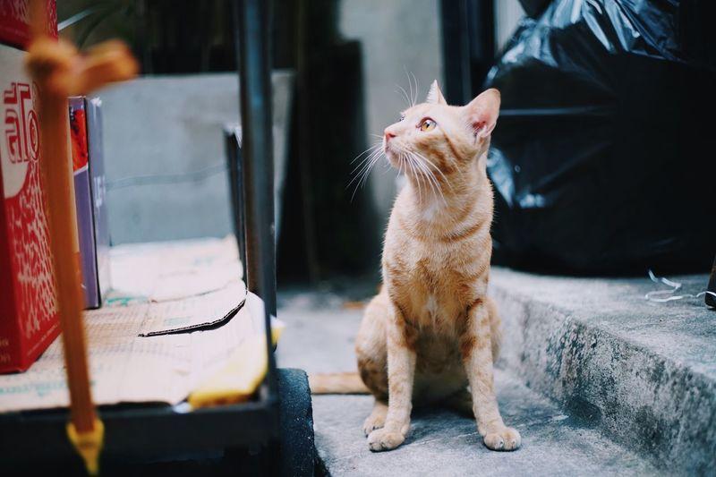 Cat One Animal Animal Themes Animal Domestic Animals Mammal Pets Domestic