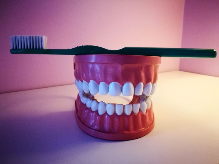 smile Toothbrush Gums Cleaning Hygenic Dental Model Hygene Smile Teeth Teeth Model Teeth Care Dentist Dentistry Equipment EyeEm Selects Healthcare And Medicine No People Indoors  Dental Health Colored Background Day Indoors