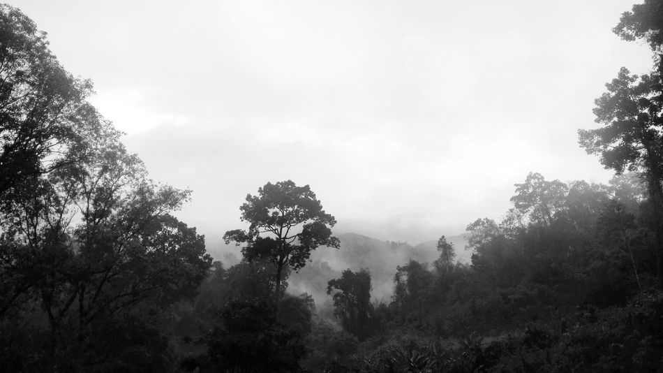 Nature Outdoors Black And White Chiang Dao Tree Fog