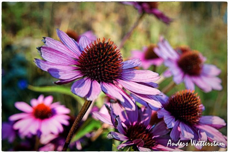 Flower Fragility Petal Beauty In Nature Nature Purple