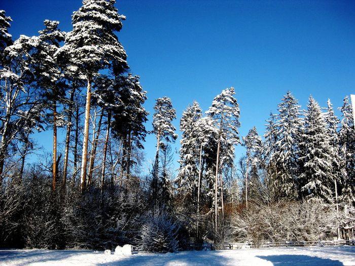 Snowy forest Snow Water Clear Sky Tree Blue Sea Sunlight Sky Cold Winter Frozen