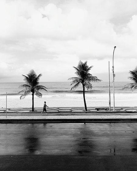 Palm Tree Water Cloud - Sky Beach Sea Sky Day Outdoors People One Man Only Brasil ♥ Brasil Rio Rio De Janeiro Riodejaneiro Rio De Janeiro Eyeem Fotos Collection⛵ Rio De Janeiro, Brazil Carioca Brazil Neighborhood Map