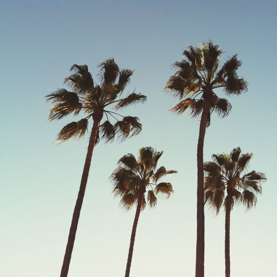 Home. Home Palm Trees California