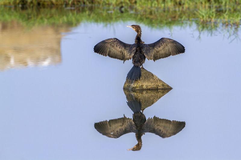 Bird on a lake