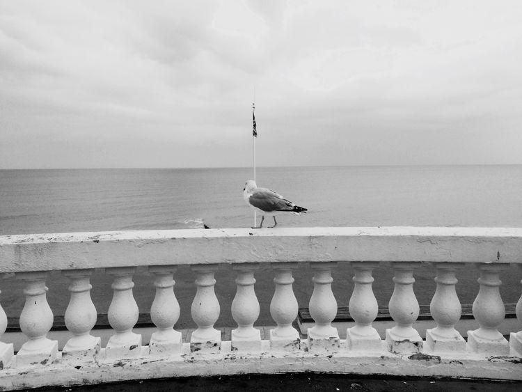 Lone Ranger. Animal Themes Bird Wildlife Seagull Sea Perching Water Sea Bird Cloud - Sky Beach Animals In The Wild One Animal Horizon Over Water Retaining Wall Zoology Vertebrate Roof Sky Tranquility Day Nature