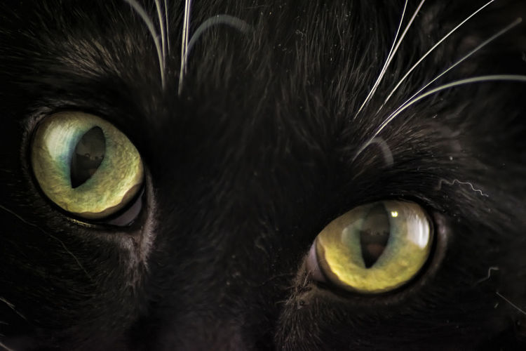 Black cat with green eyes No People Close-up Animal Themes Indoors  Fragility Day Cats Of EyeEm Cats Cat Eyes Black Black Cat Green Eyes Green Cat Eyes White Whiskers