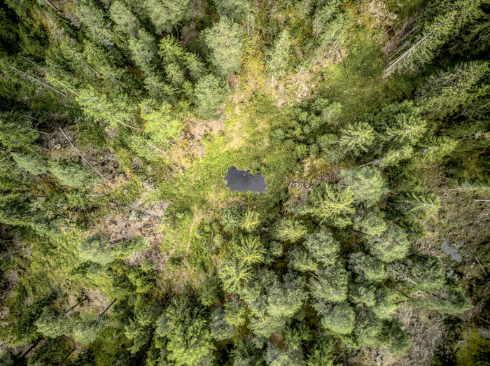 Creek Drone  EyeEm Nature Lover Nature Beauty In Nature Birdseyeview Dji Dronephotography Engiadina Engiadinabassa Forest Green Color Mavic Nature No People Outdoors Paradise Silence Swiss Mountains Tree Perspectives On Nature