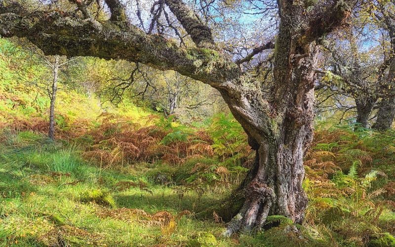 Characterful old tree Scottish Highlands Glen Affric Scotland Tree Hugging A Tree EyeEm Nature Lover Light Highlands