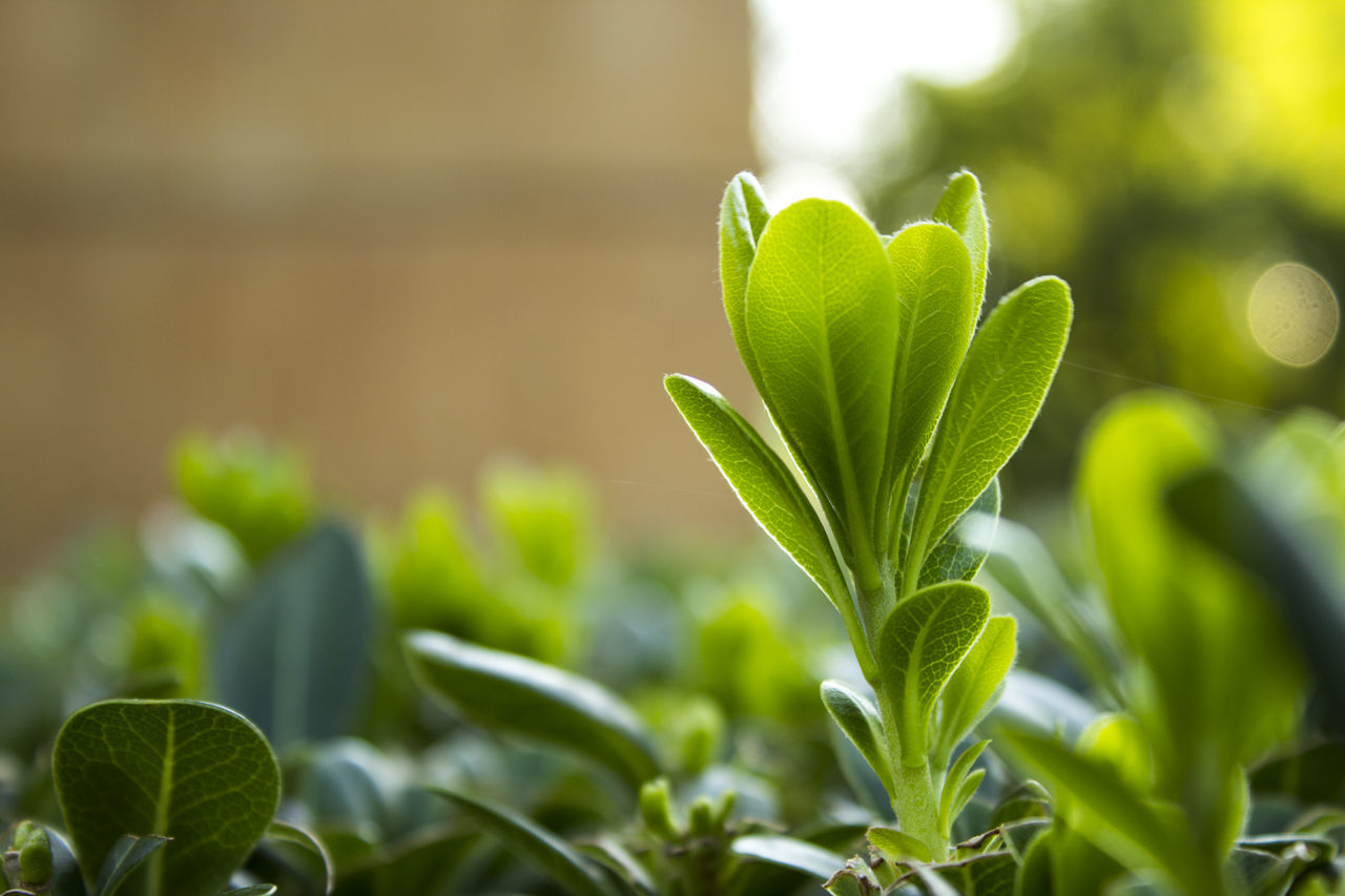 growth, green color, plant, nature, leaf, beginnings, beauty in nature, new life, no people, freshness, close-up, outdoors, day, fragility