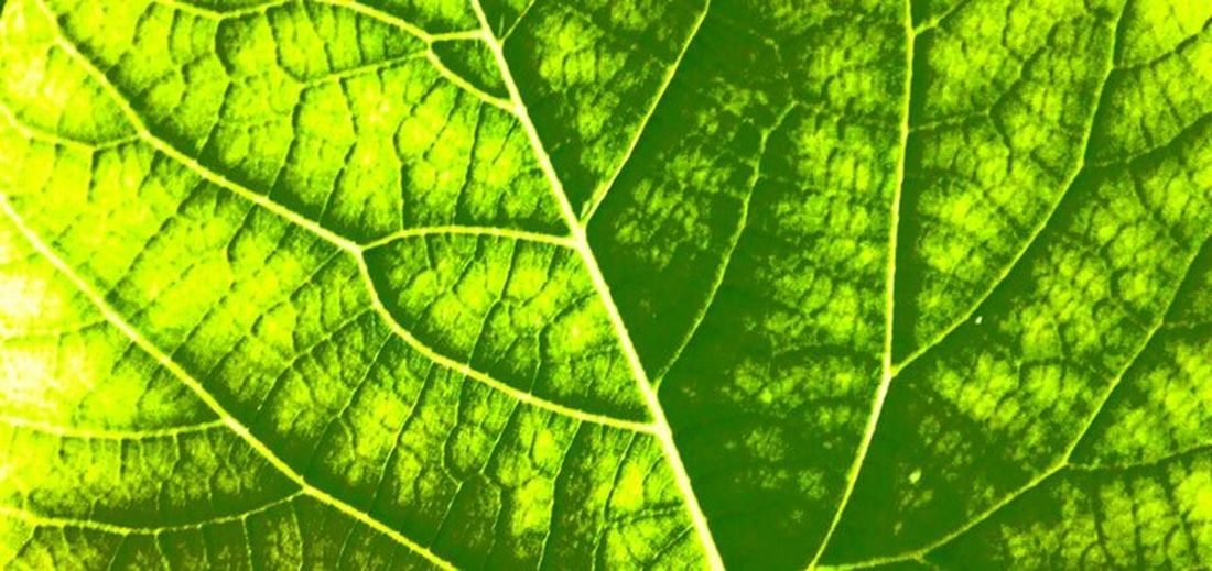Green Nature~Art Nature_collection Nature