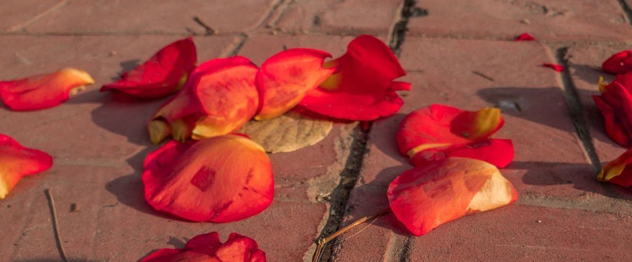 High angle view of red flowers on leaves