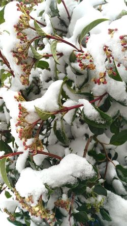 Growth Nature White Color Plant Beauty In Nature Cold Temperature Snow Outdoors Freshness No People