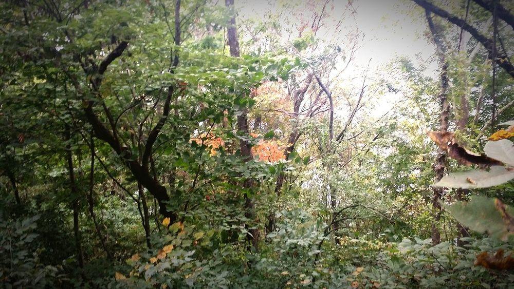 Foest🌳 Trees #leaves