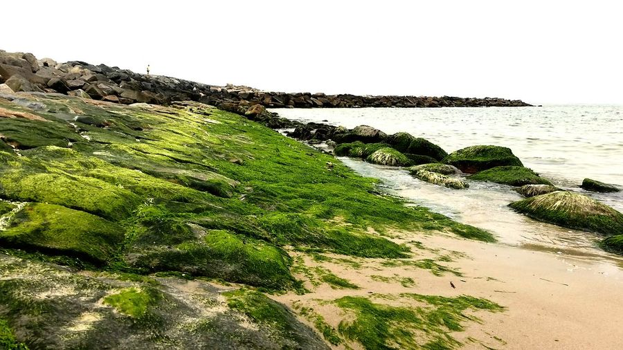 Green beach... Beach Sand Rock Stone Water Denmark 🇩🇰 Denmark Danish Nature Nature Outdoor Algea Seaweed Bay Shore Coast Sky Enjoying Life Hanging Out Feeling Inspired Relaxing Walking Seaside EyeEm Nature Lover Peaceful Trip