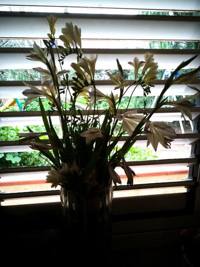 Growth Nature Plant Indoors  Window No People Leaf Close-up Beauty In Nature Flower Fragility