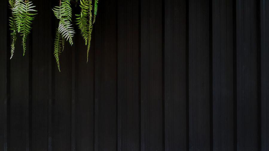 Full frame shot of plants against wall