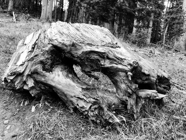 Black and white stump Tree Tree Trunk Nature Day Growth No People Wood - Material