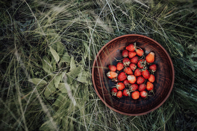 High angle view of fruits in bowl on field