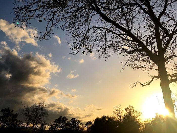Sky Plant Tree
