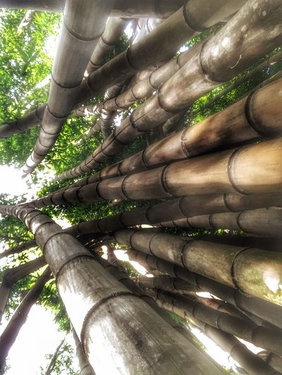 Bamboo Costa Rica Bamboo Plant Tree No People Growth Nature Day Sunlight Low Angle View Full Frame Outdoors Tree Trunk Trunk Pattern Backgrounds Green Color Textured  Close-up Beauty In Nature Reflection Tranquility