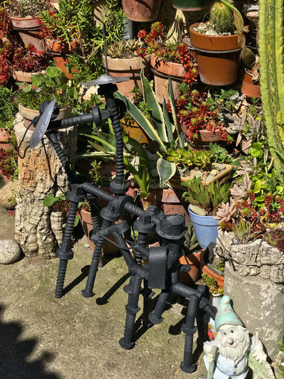 Jardin miniature d'un facteur Cheval local Nature Day Plant Growth Weapon Group Of People Outdoors High Angle View Potted Plant Men Front Or Back Yard Full Length Sunlight People Field Real People Human Representation Land Representation Leaf Gardening Government