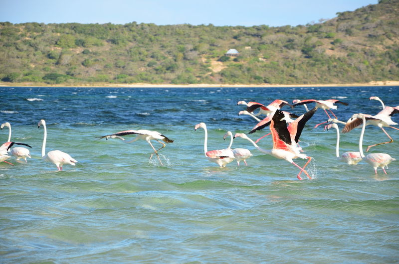 Animal Themes Animal Wildlife Animals In The Wild Beauty In Nature Bilene Bilene😊 Bird Day Lake Mozambique Nature No People Outdoors Sky Water